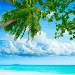 Ocean-palm-paradise_1600x1200.jpg