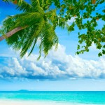 Ocean-palm-paradise_1920x1200.jpg